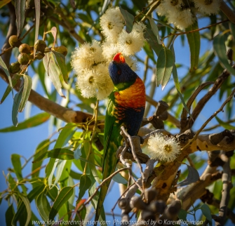Barwon Heads, Victoria - Australia 'Sunrise at the Beachfront' Photographed by Karen Robinson March 2019 Comments - A beautiful morning with hubby visiting the area of Barwon Heads and some surrounding areas photographing the sunrise, the ocean beach and local native birdlife. Photograph featuring Rainbow Lorikeet.