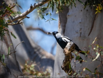 Greenvale, Victoria - Australia 'Woodlands Historic Park' Photographed by Karen Robinson November 2018 Comments - a Day with daughter, granddaughter and hubby walking through this historical park taking photographs of animals and birds.