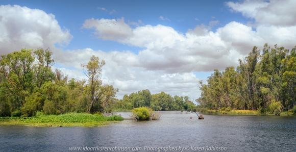 Kirwans Bridge, Victoria - Australia 'Views of Goulburn River at Turner Island Lane' Photographed by Karen Robinson Jan 2021 Comments: Lovely day at the beautiful scenic Goulburn River. Water levels were healthy helping to ensure the surrounding vegetation was lush green. Great white fluffy clouds streamed across the blue sky, and a small flocks of Corellas flying high in the sky made for a pretty summer river scene.
