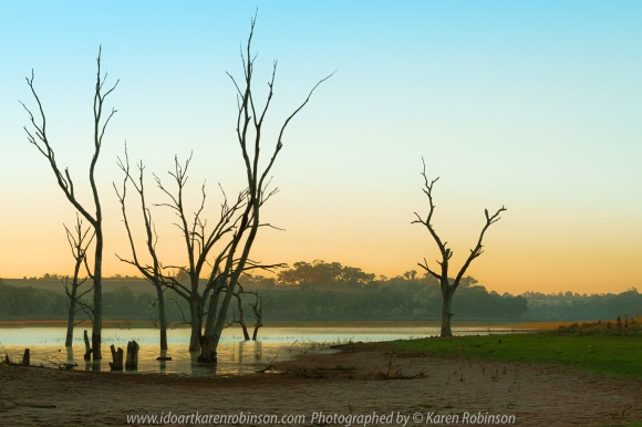 Kimbolton, Victoria - Australia 'Bo-Bay Sunrise at Lake Eppalock' Photographed by Karen Robinson Feb 2021 Comments: Early summer morning capturing the sunrise at Bo-Bay located within Lake Eppalock. Photograph featuring beautiful early morning sunrise at edge of Bo-Bay at Lake Eppalock with silhouettes of stark tall trees.