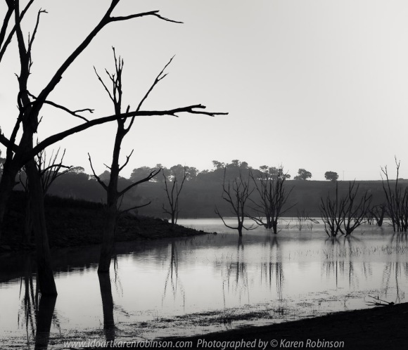 Kimbolton, Victoria - Australia 'Bo-Bay Sunrise at Lake Eppalock' Photographed by Karen Robinson Feb 2021 Comments: Early summer morning capturing the sunrise at Bo-Bay located within Lake Eppalock. Photograph featuring image as Black and White.