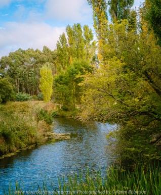 Kyneton, Victoria - Australia 'Kyneton Botanic Gardens' Photographed by Karen Robinson March 2021 Comments: Mild summer day strolling along the Campaspe River walking track within the Botanic Gardens.