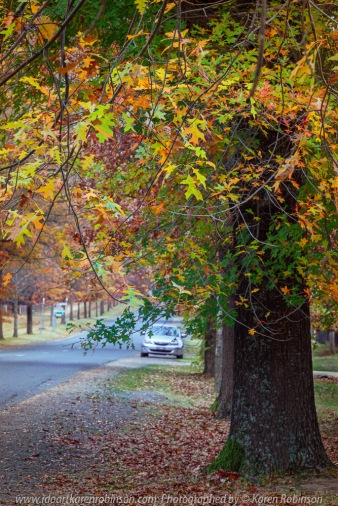 Mount Macedon, Victoria - Australia 'Colourful Autumn Displays on Honour Ave' Photographed by Karen Robinson April 2021 Comments: Different street locations within the region of Mount Macedon capturing beautiful colourful Autumn garden displays.