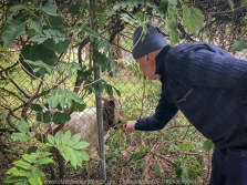 Mount Macedon, Victoria - Australia 'Colourful Autumn Displays on Devonshire Lane' Photographed by Karen Robinson April 2021 Comments: Different street locations within the region of Mount Macedon capturing beautiful colourful Autumn garden displays. Photograph featuring hubby feeding lonely goat!