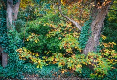 Mount Macedon, Victoria - Australia 'Colourful Autumn Displays on Taylors Road' Photographed by Karen Robinson April 2021 Comments: Different street locations within the region of Mount Macedon capturing beautiful colourful Autumn garden displays.