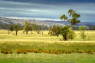 Tooborac, Victoria - Australia 'Zig Zag, Laddenhill Roads and Zochs Lane' Photographed by Karen Robinson April 2021 Comments: Early morning drive through the region at the beginning of Autumn.